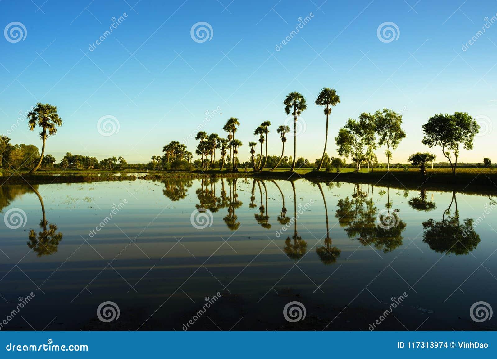 Paysage de lever de soleil avec des palmiers de sucre sur la rizière dans le matin Delta du Mékong, Doc. de Chau, An Giang, Vietn