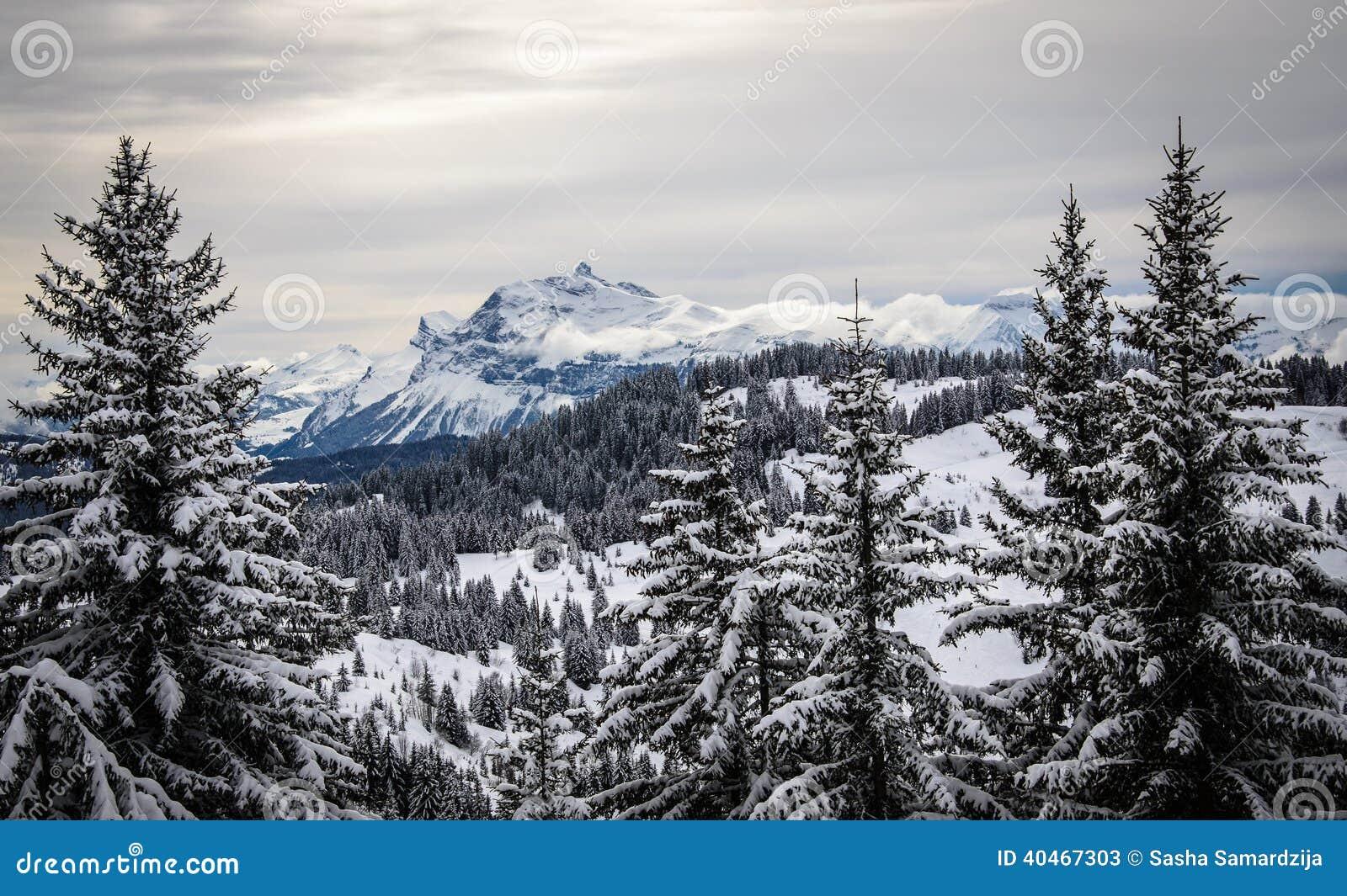 paysage de montagne avec des arbres de christmass couverts de neige photo stock image 40467303. Black Bedroom Furniture Sets. Home Design Ideas