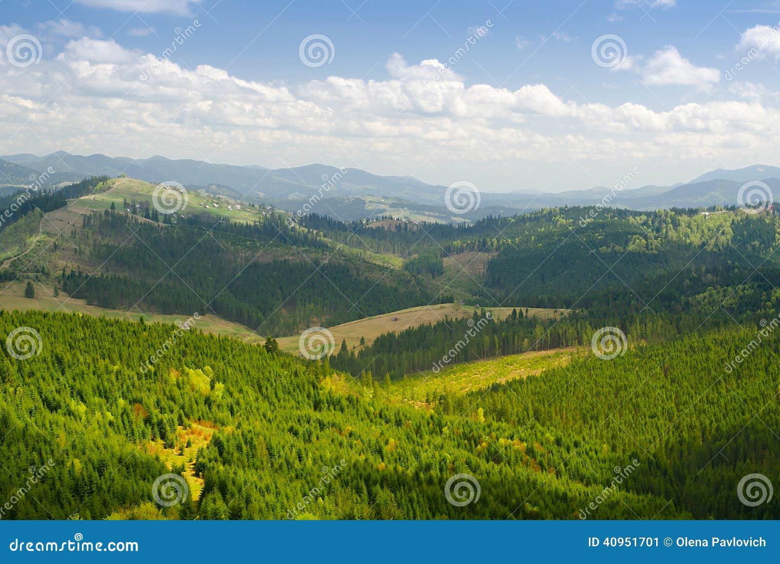 Paysage de montagne de forêt Carpathien, Ukraine