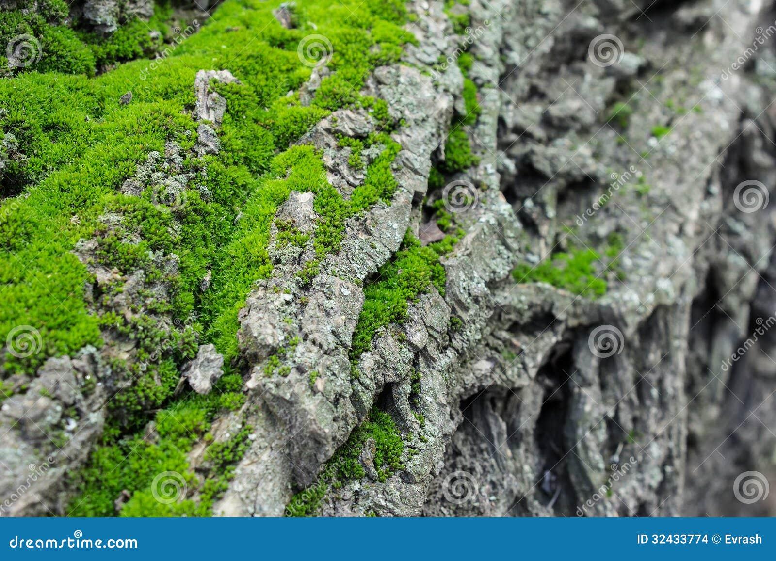 Paysage de montagne de mousse verte sur un arbre images stock image 32433774 - Mousse sur les arbres ...