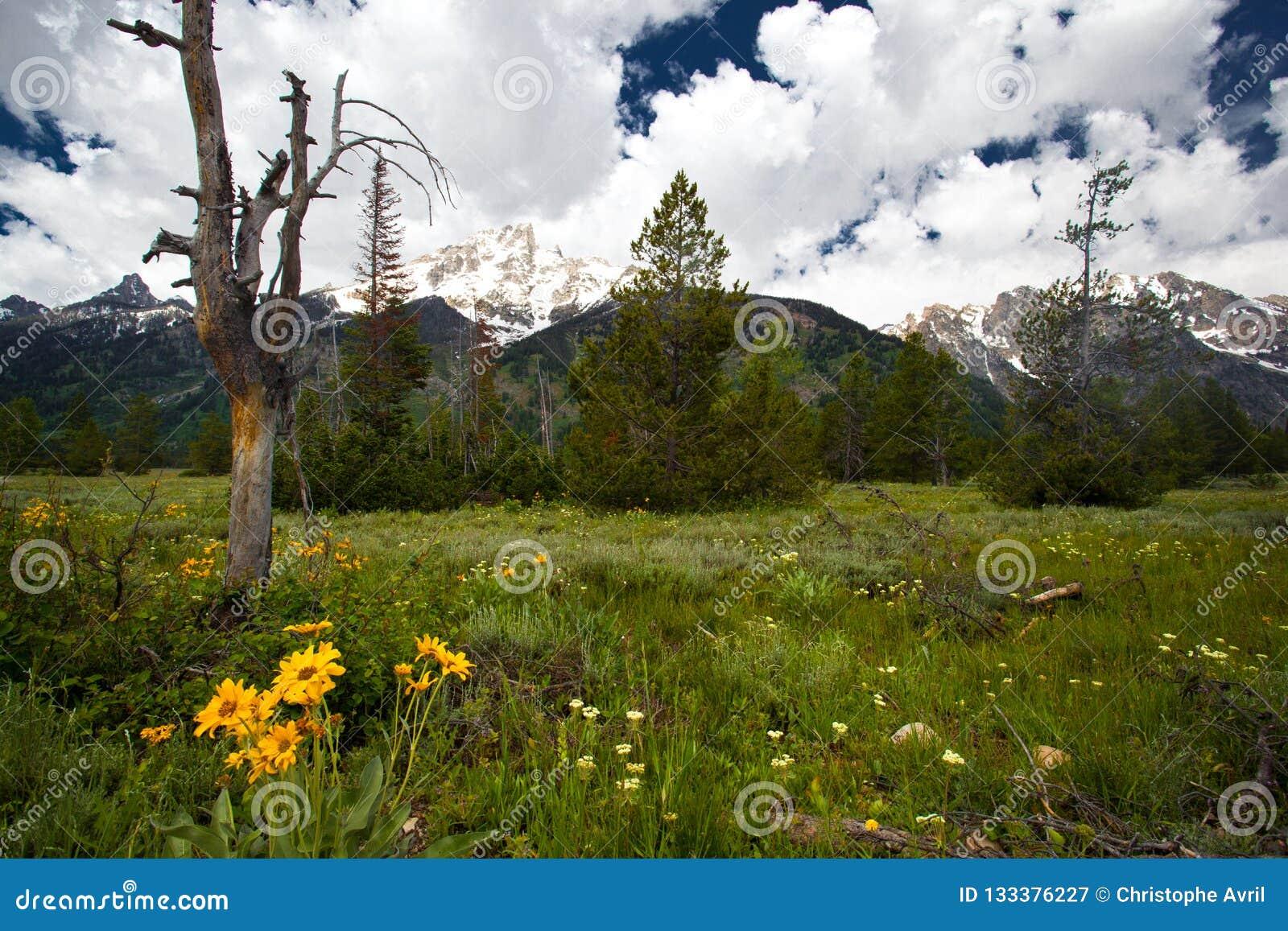 Paysage de montagne de Yellowstone