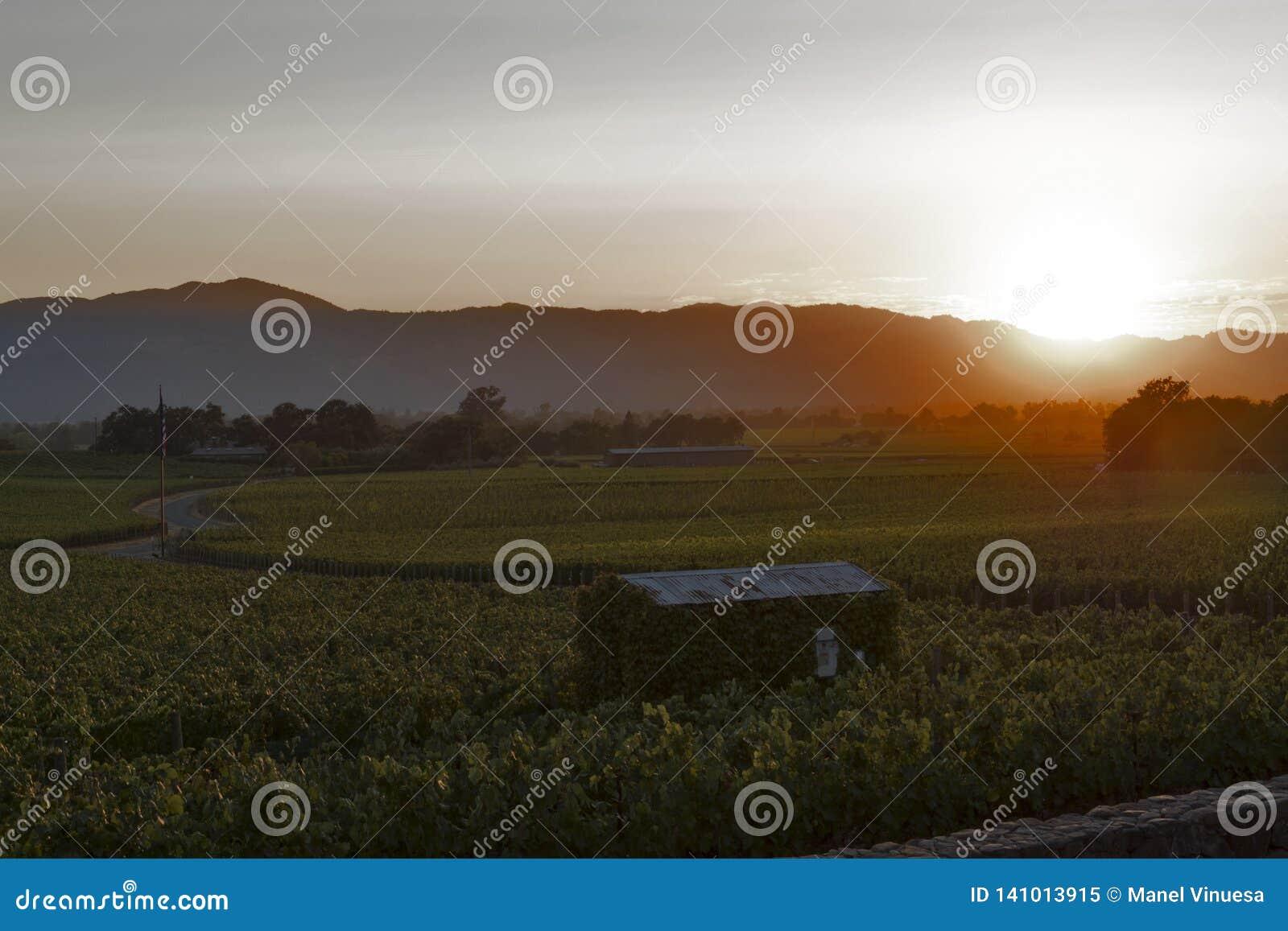 Paysage de Napa Valley au coucher du soleil, la Californie, Etats-Unis