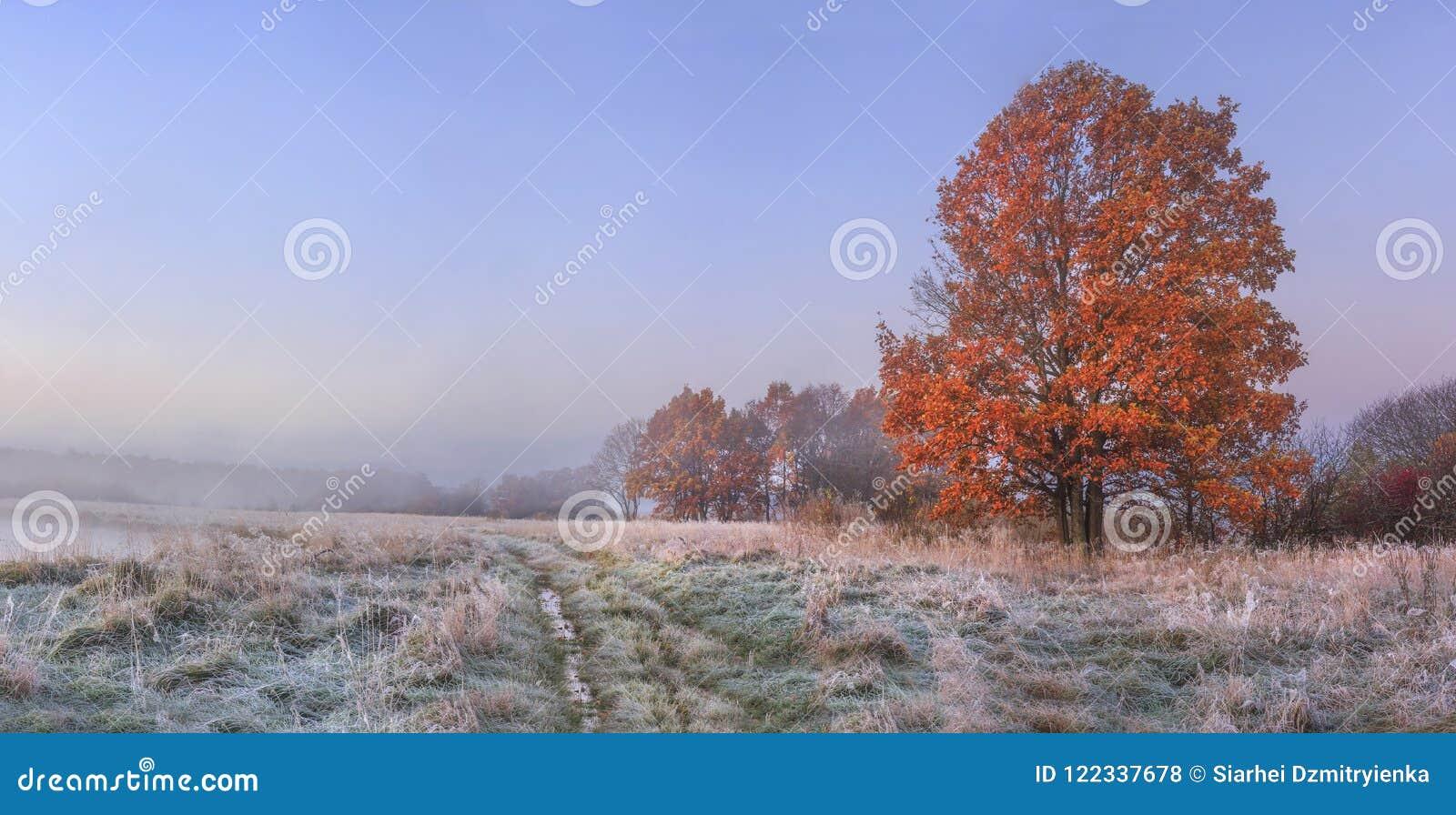 Paysage de nature d automne avec le ciel clair et l arbre coloré Pré froid avec la gelée le matin d herbe en novembre