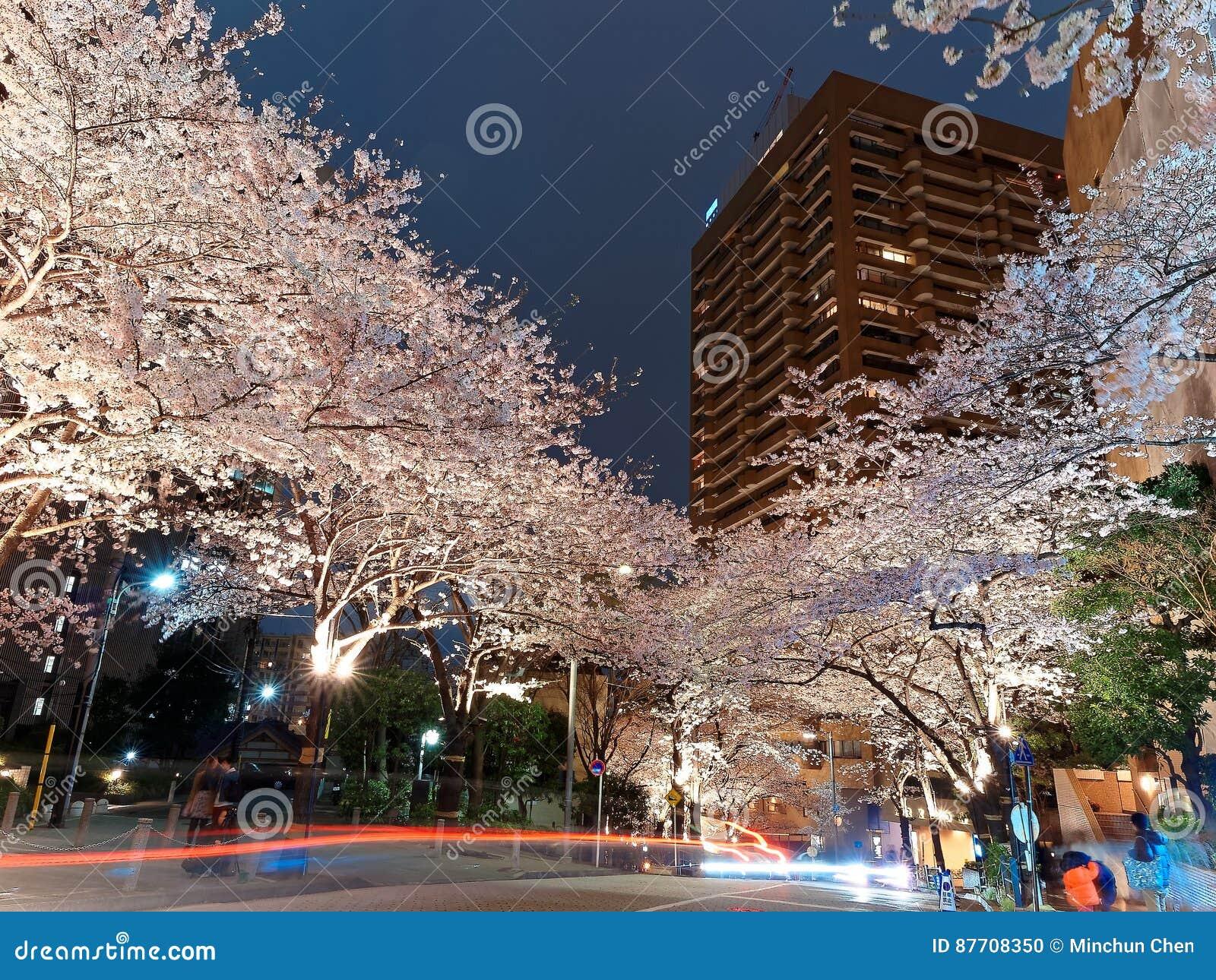 Paysage de nuit des collines d arche de Roppongi à Tokyo du centre pendant la Sakura Matsuri Festival
