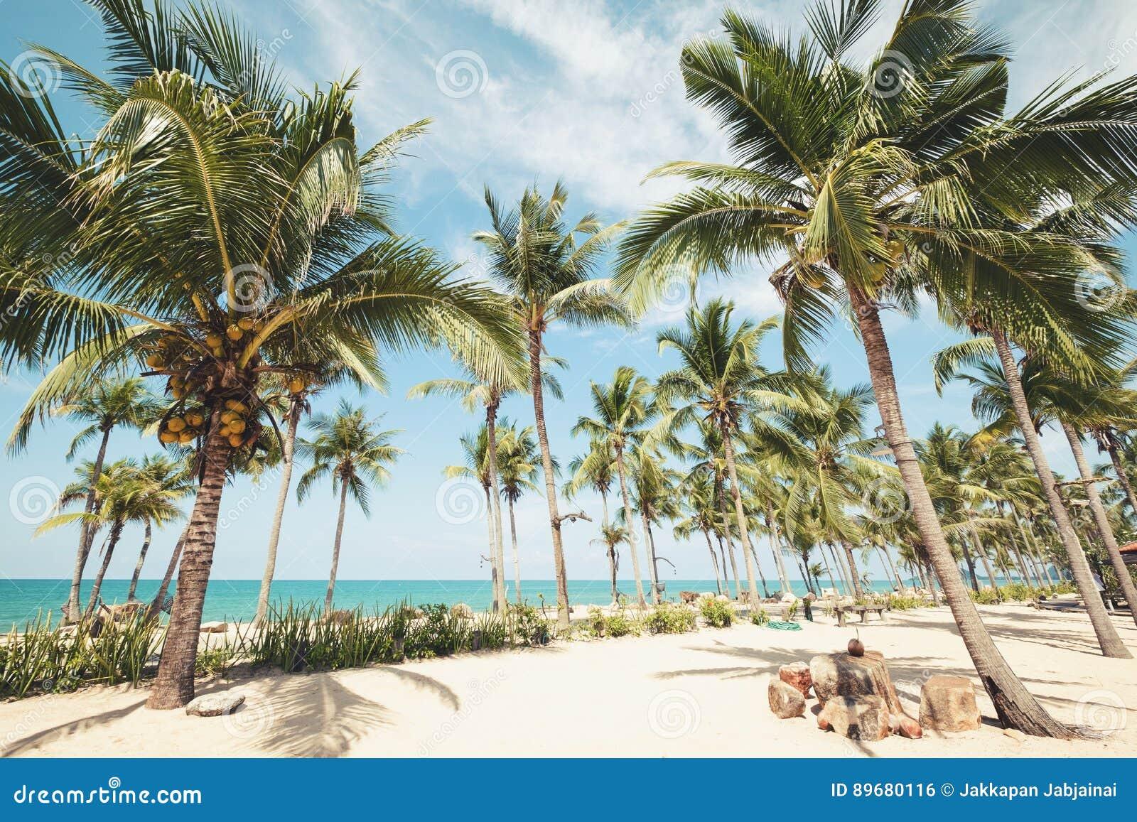 Paysage de palmier de noix de coco sur la plage tropicale - Palmier noix de coco ...