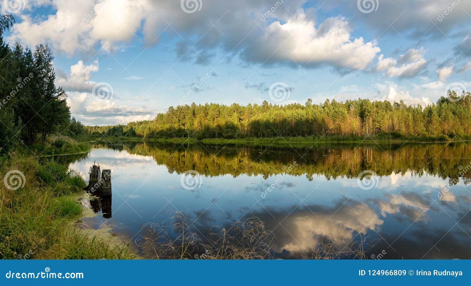 Paysage de soirée d été sur le lac Ural avec des pins sur le rivage, Russie