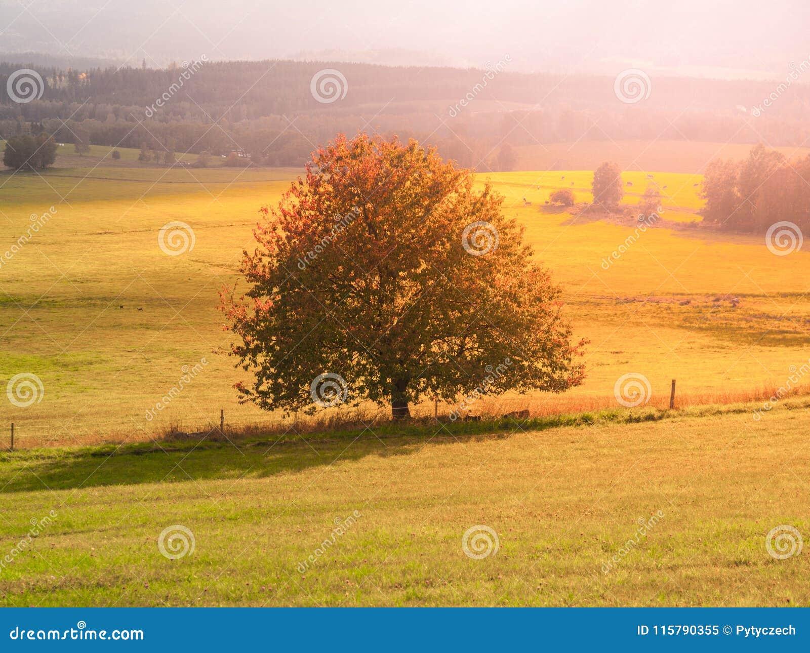 Paysage de Sumava avec l arbre seul au milieu du pré, République Tchèque