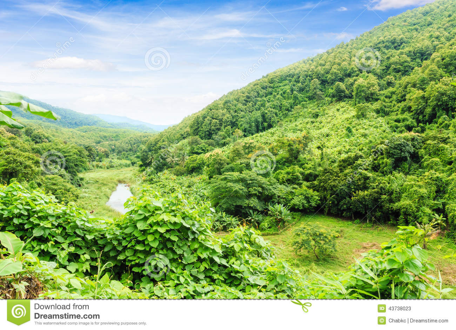 Paysage de vert for t photo stock image 43738023 for Paysage vert
