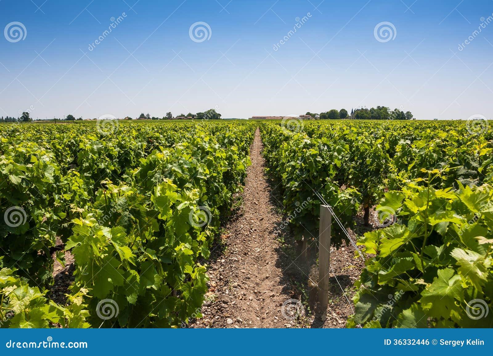 Paysage de vignoble près de Bordeaux, France