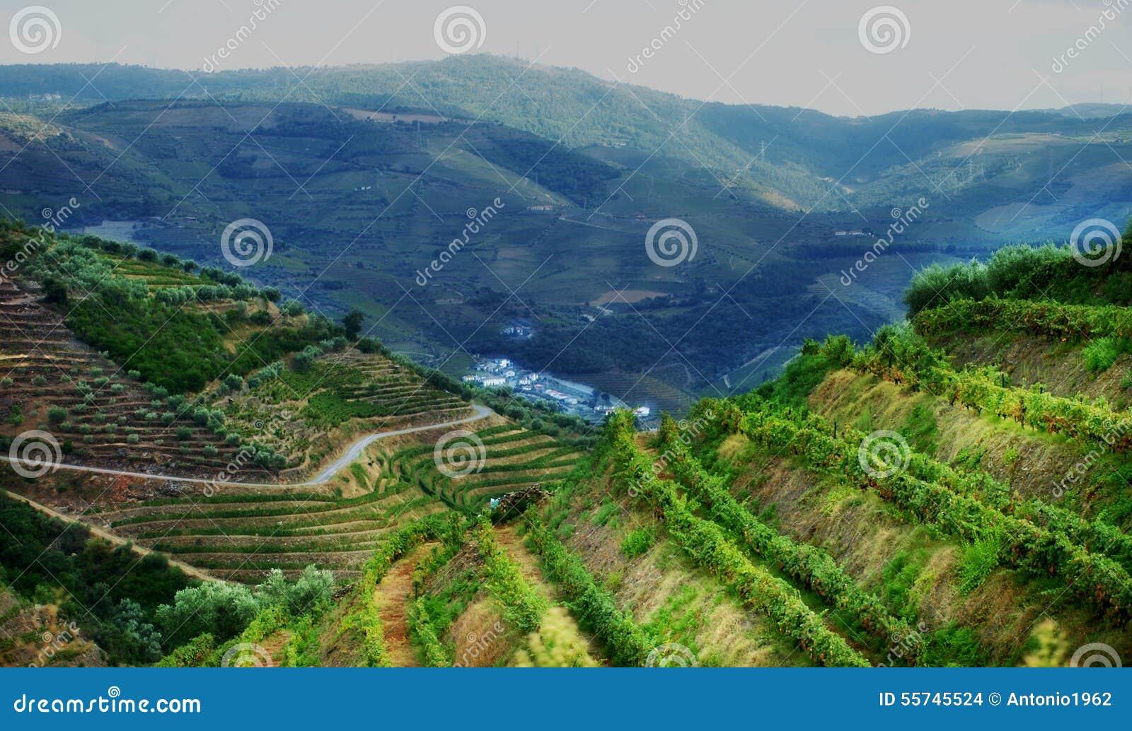 Paysage de vignobles de vallée du Portugal Douro