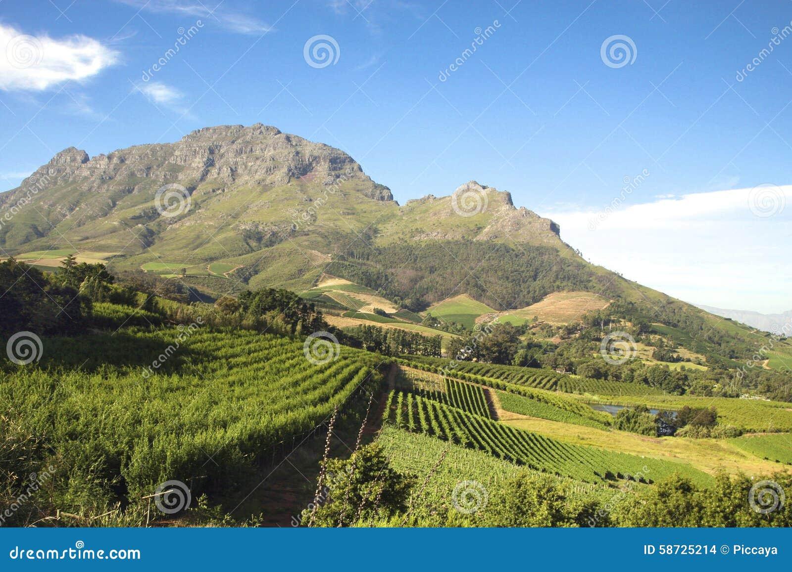 Paysage des établissements vinicoles en Afrique du Sud