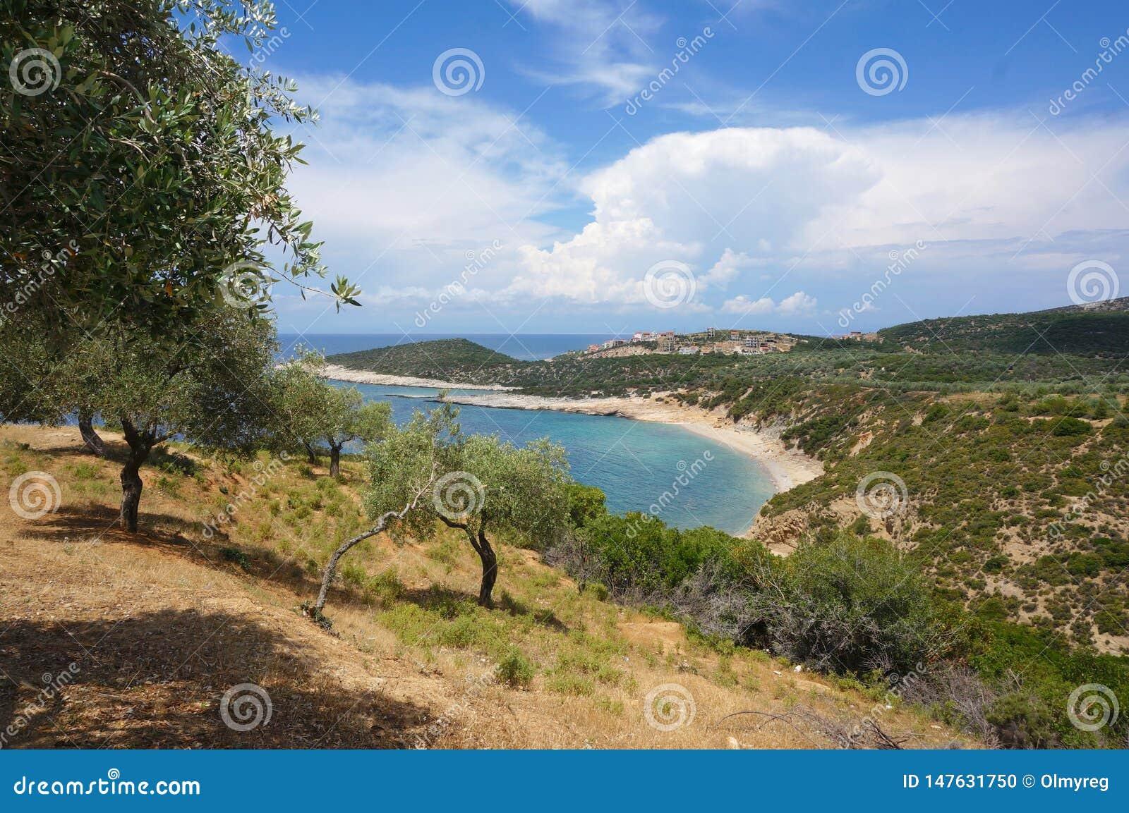 Paysage du sud accidenté avec les oliviers et leur ombre, vue de mer, plage rocheuse, nuages