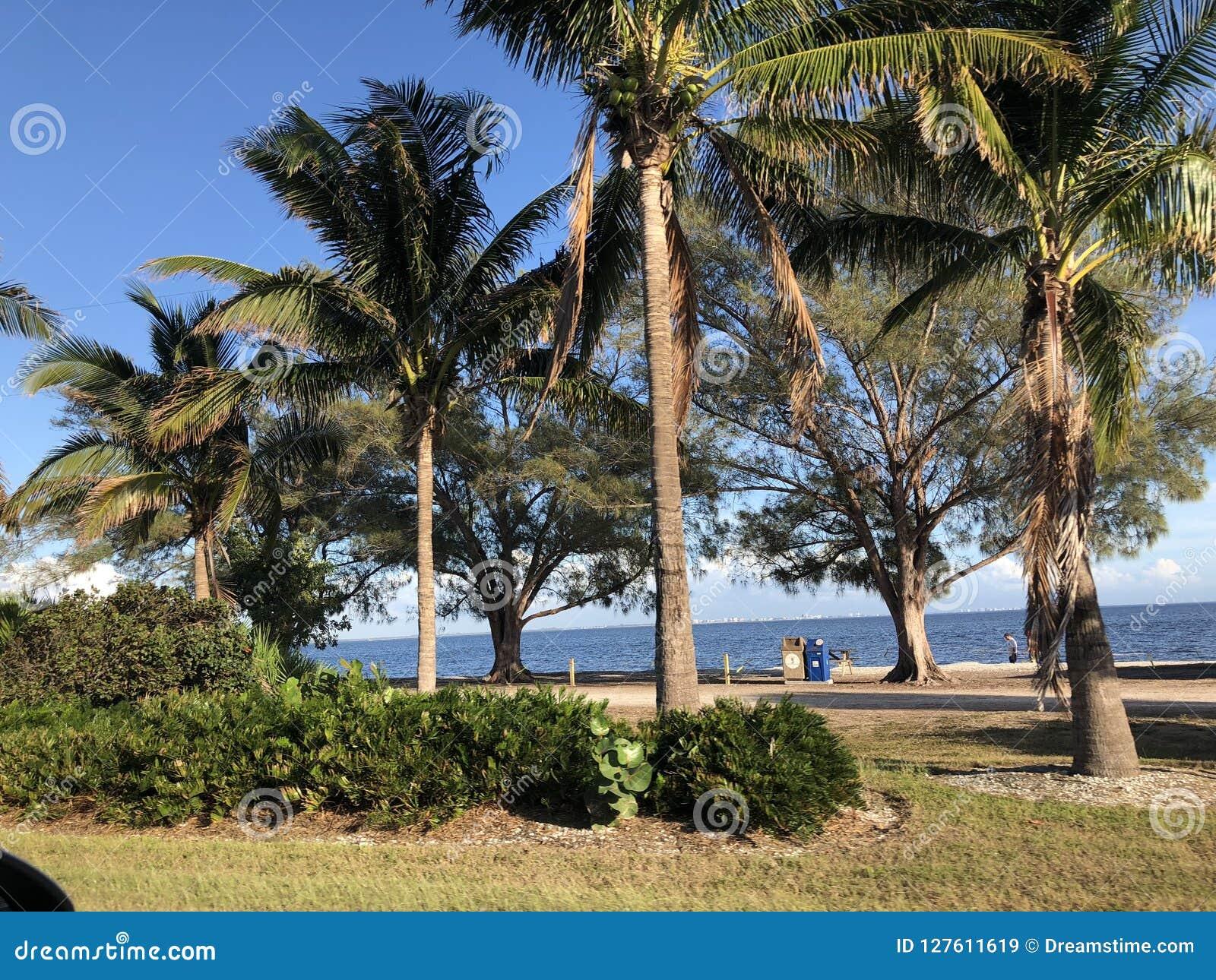 Paysage en Floride