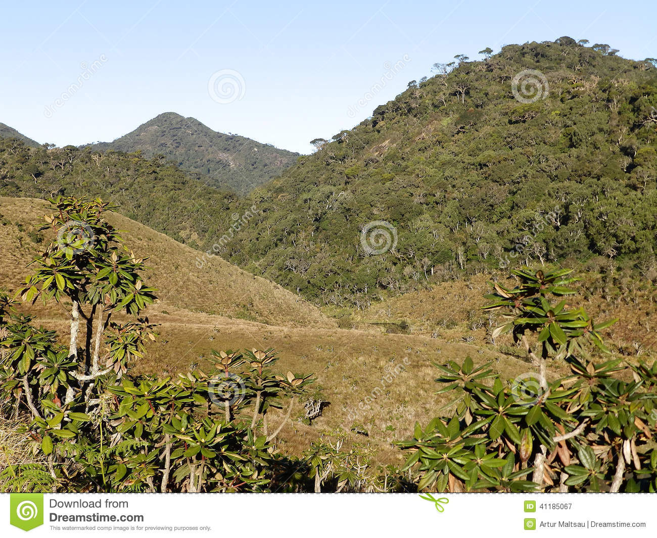paysage en parc national horton plains sri lanka image stock image du herbe for t 41185067. Black Bedroom Furniture Sets. Home Design Ideas