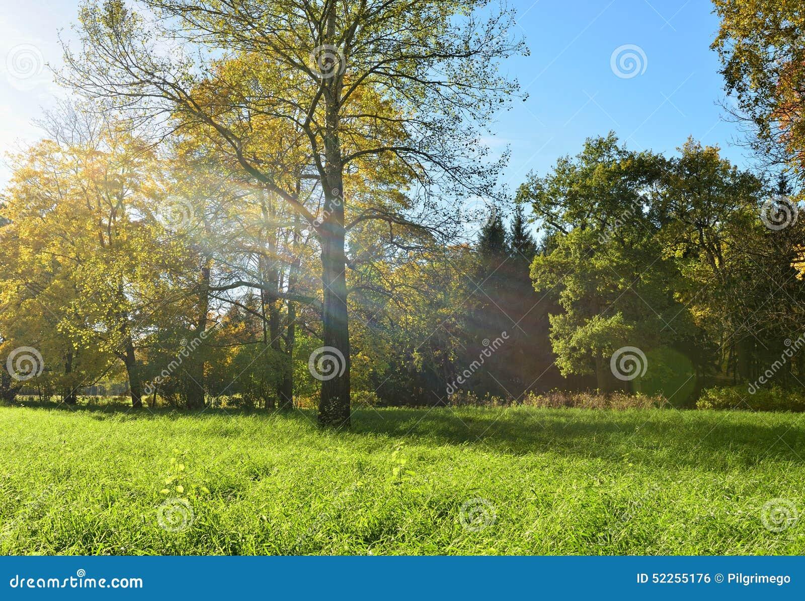 Paysage ensoleill d 39 automne avec dans le jardin de for Paysage de jardin