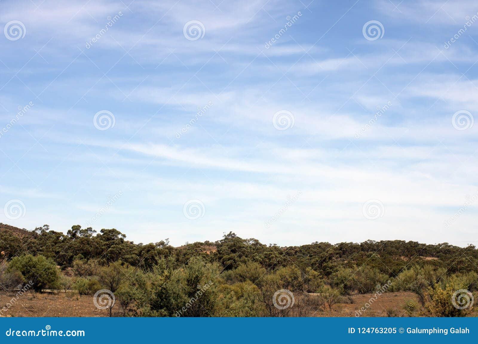 Paysage le long de manière de gammes de ` de Flinders, au nord de colporteur, Australie du sud