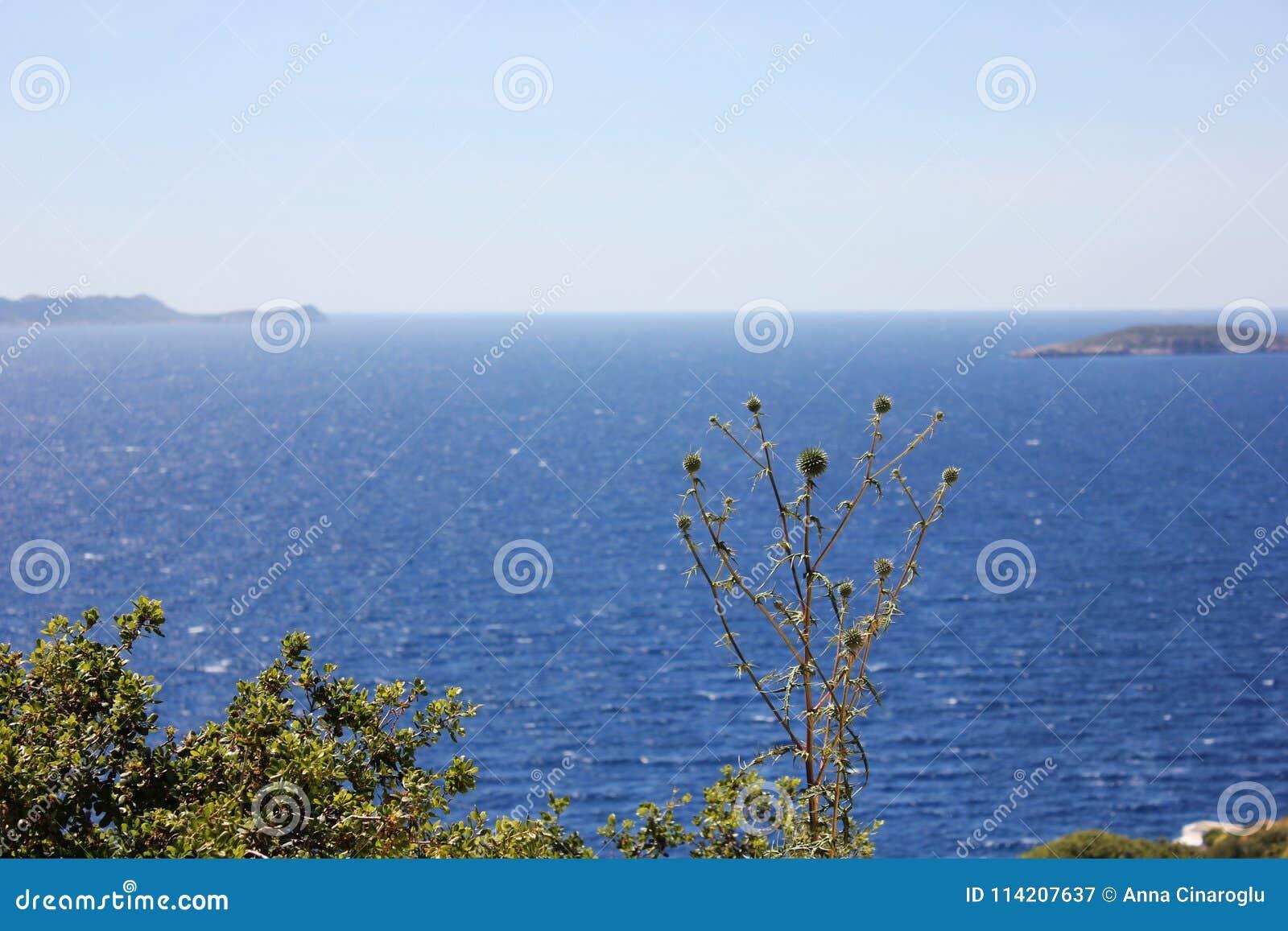 Paysage marin brouillé avec des verts et fleurs dans le premier plan