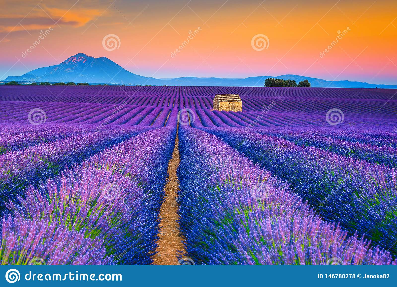 Paysage merveilleux d été avec des gisements de lavande en Provence, Valensole, France