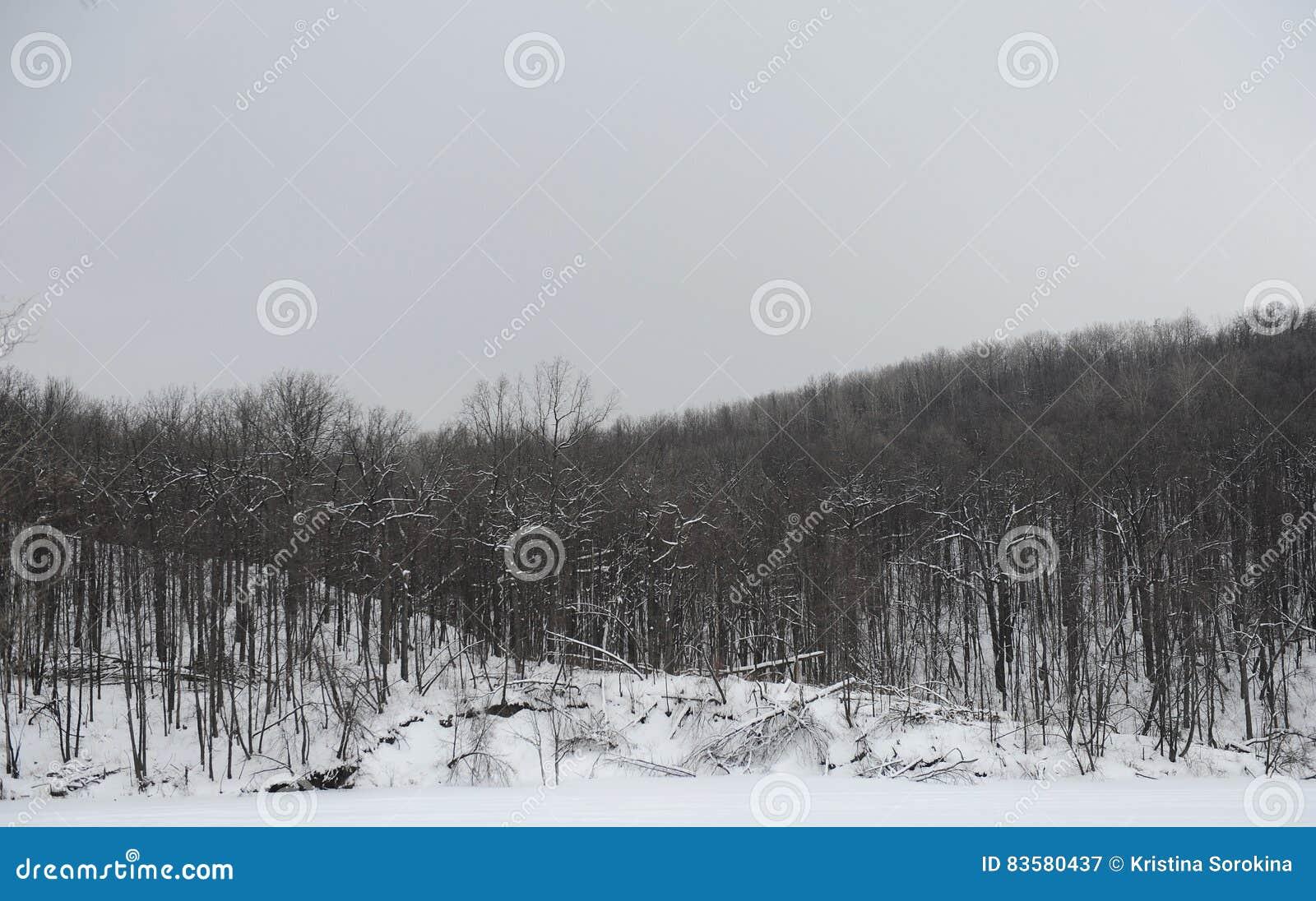 Paysage monochrome gris d hiver