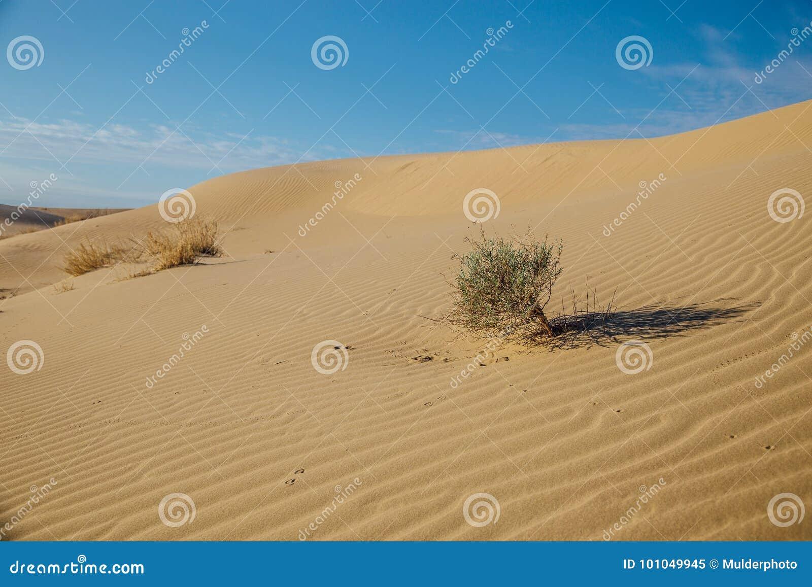 Paysage naturel de désert, dunes de sable, buissons