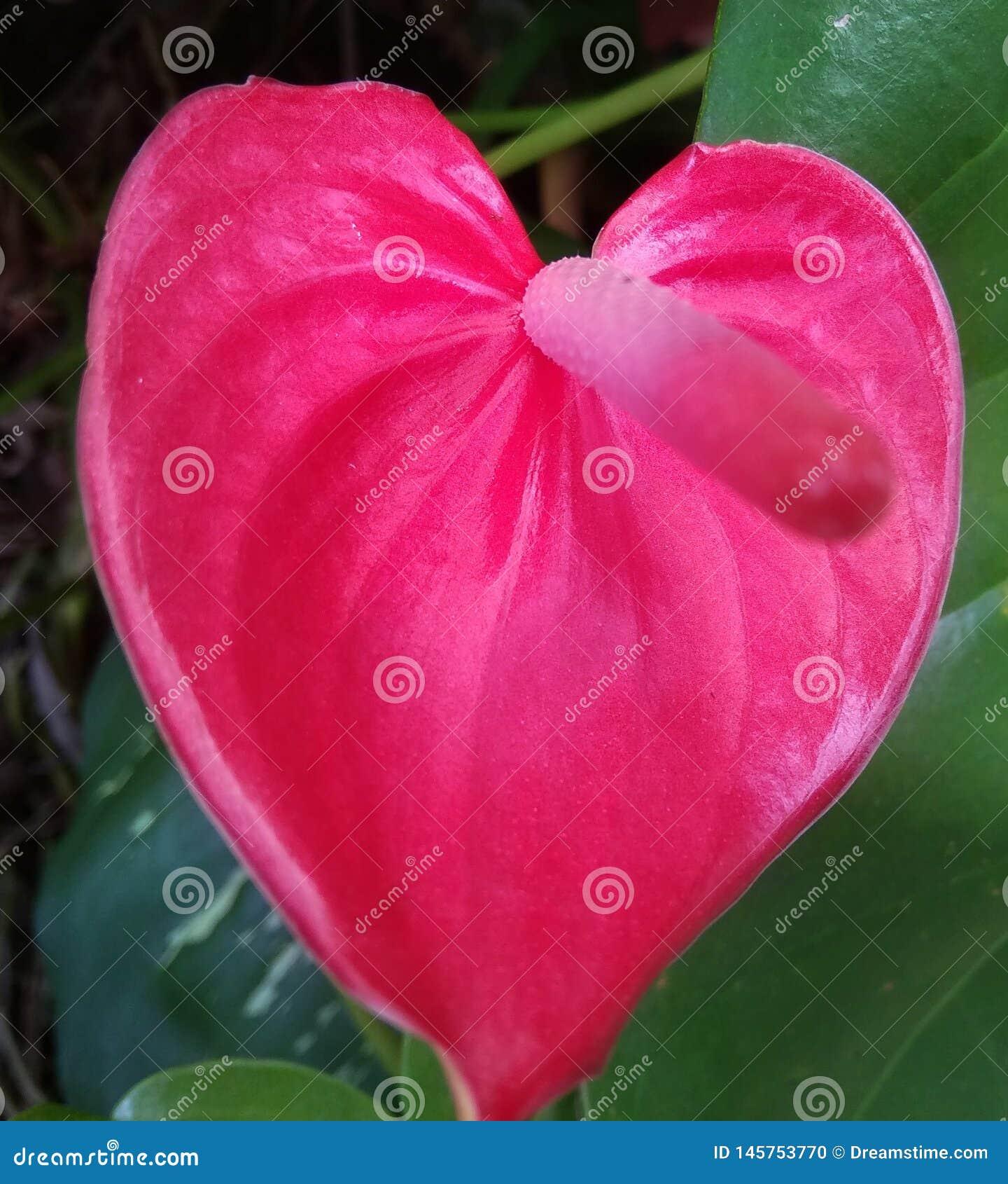 Paysage naturel des fleurs rouges qui sont belles et appropriées aux papiers peints