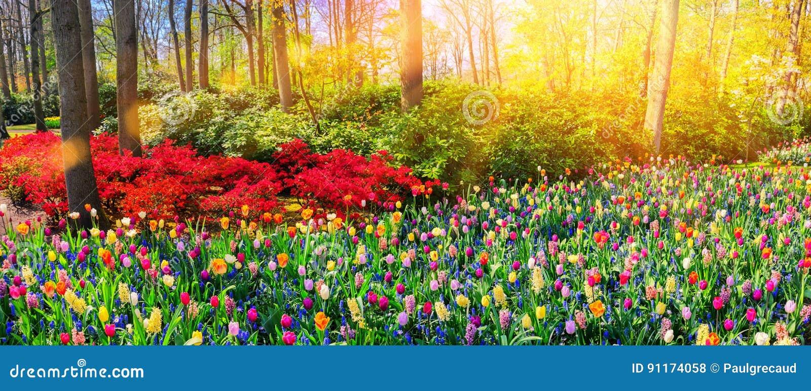 Paysage panoramique avec les fleurs multicolores de ressort Backg de nature