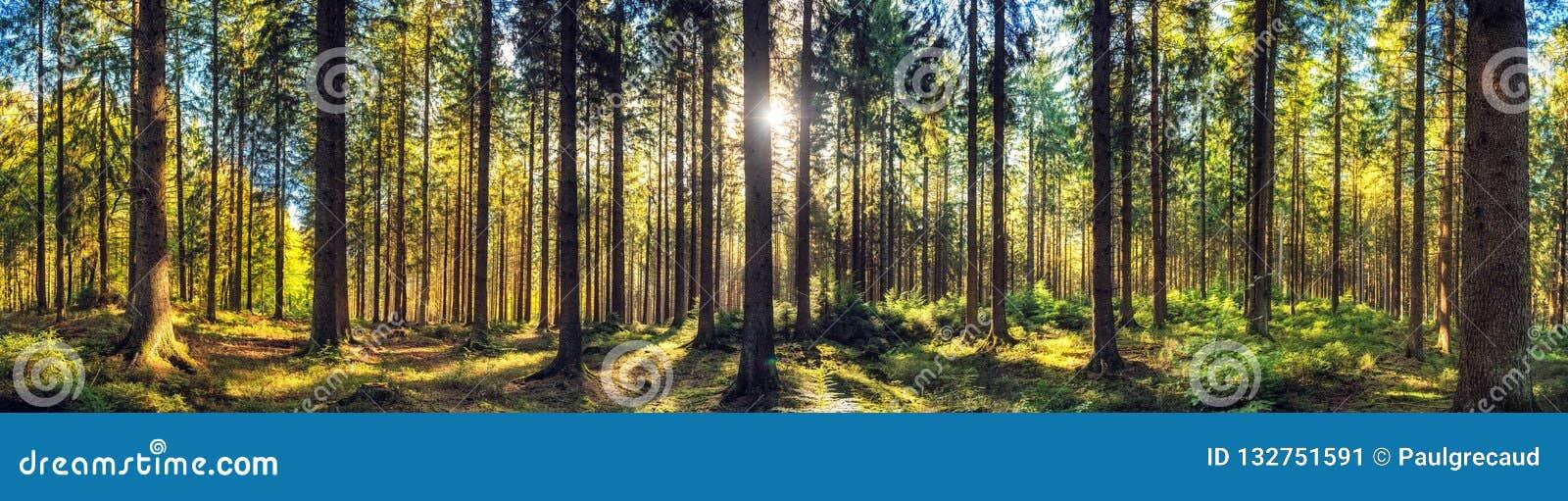 Paysage panoramique de forêt d automne