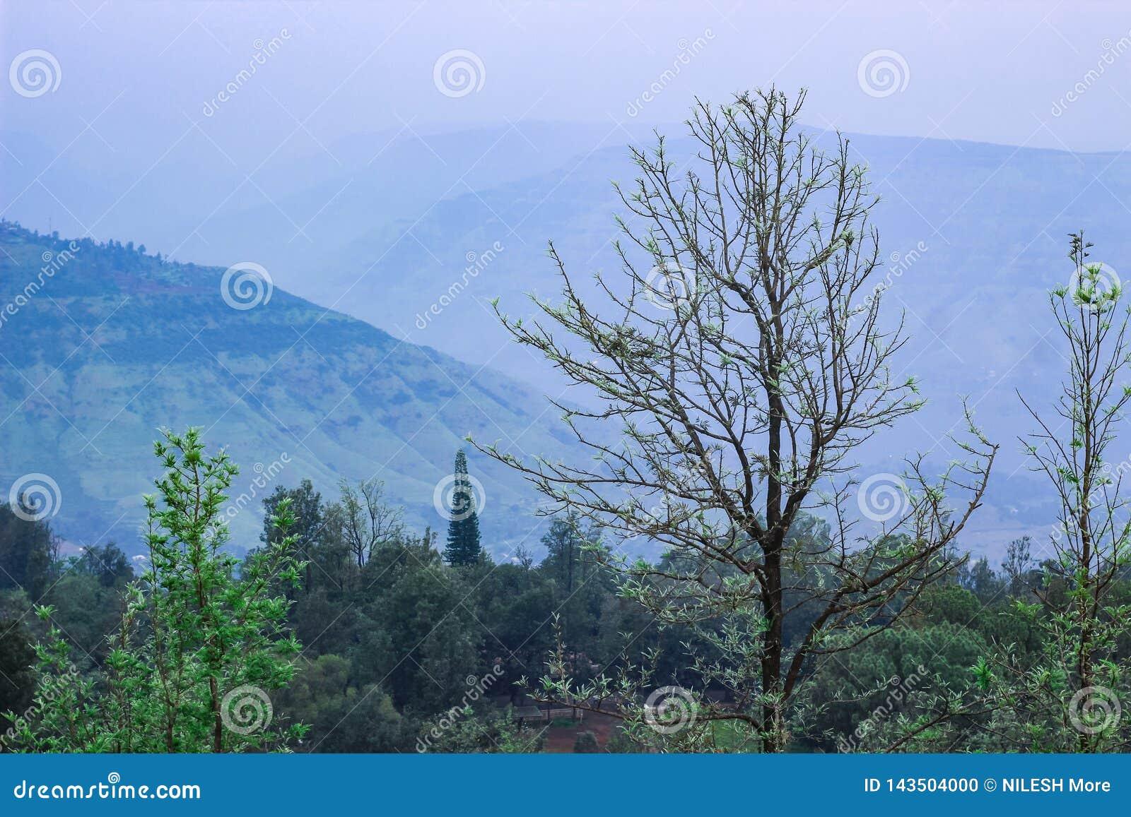 Paysage près de forêt de Panchgani