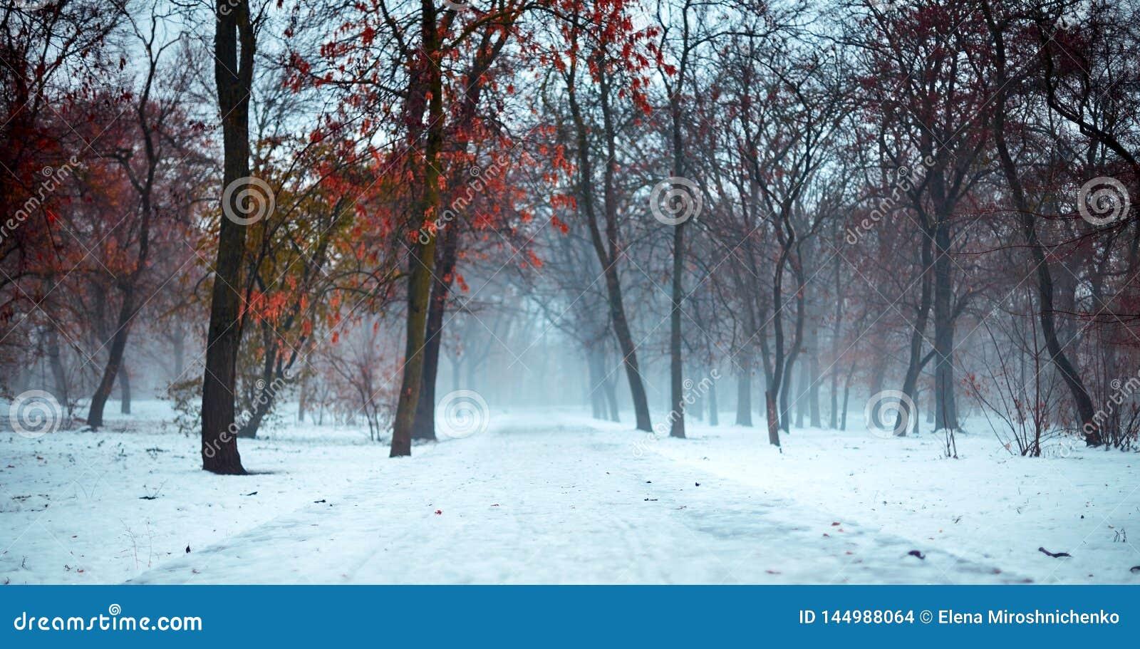 Paysage rampant et brumeux d hiver en parc neigeux, avec le chemin abandonné L atmosphère déprimée, sombre, mate, romantique