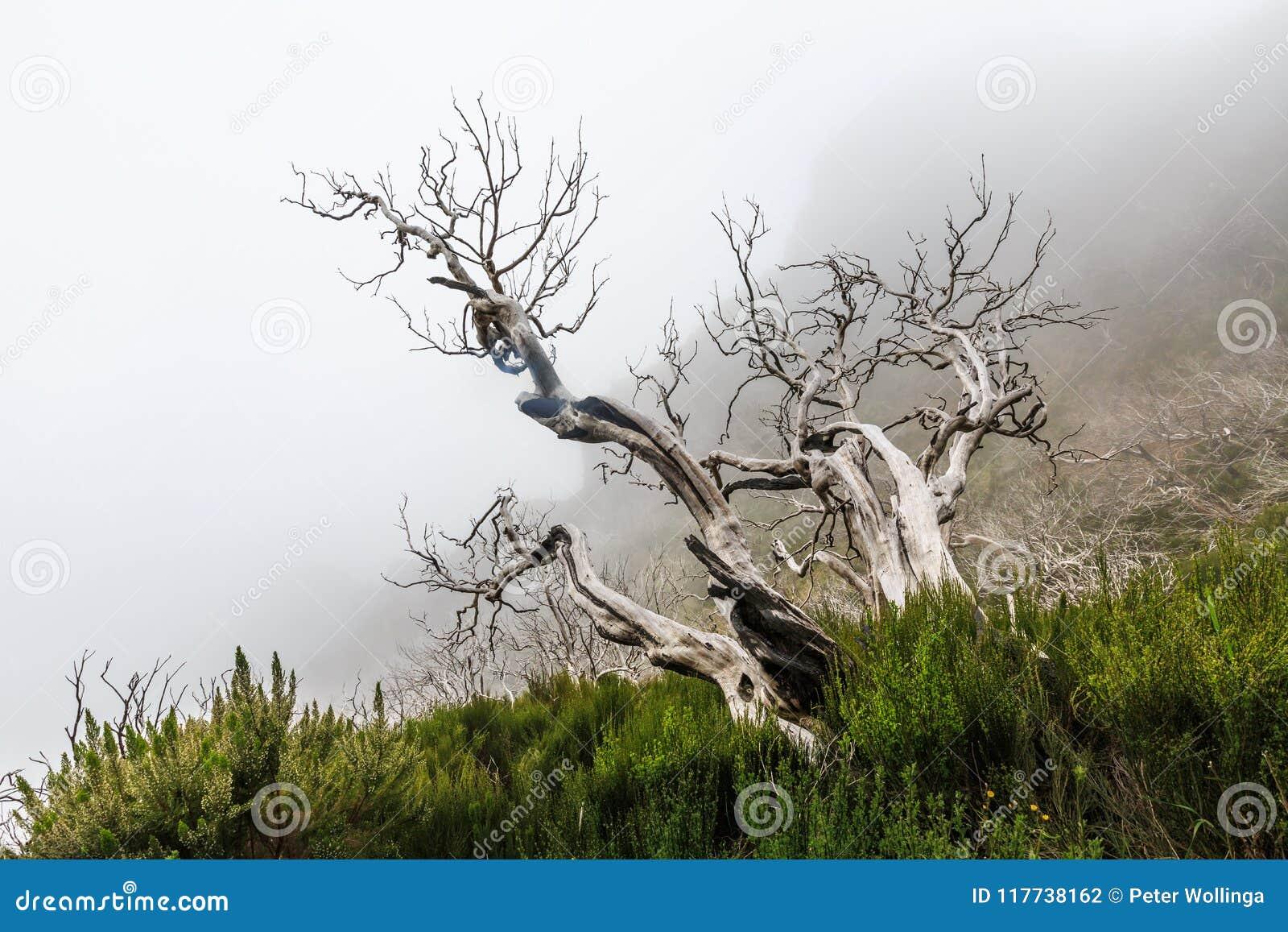 Paysage rampant montrant une forêt foncée brumeuse avec le tre blanc mort