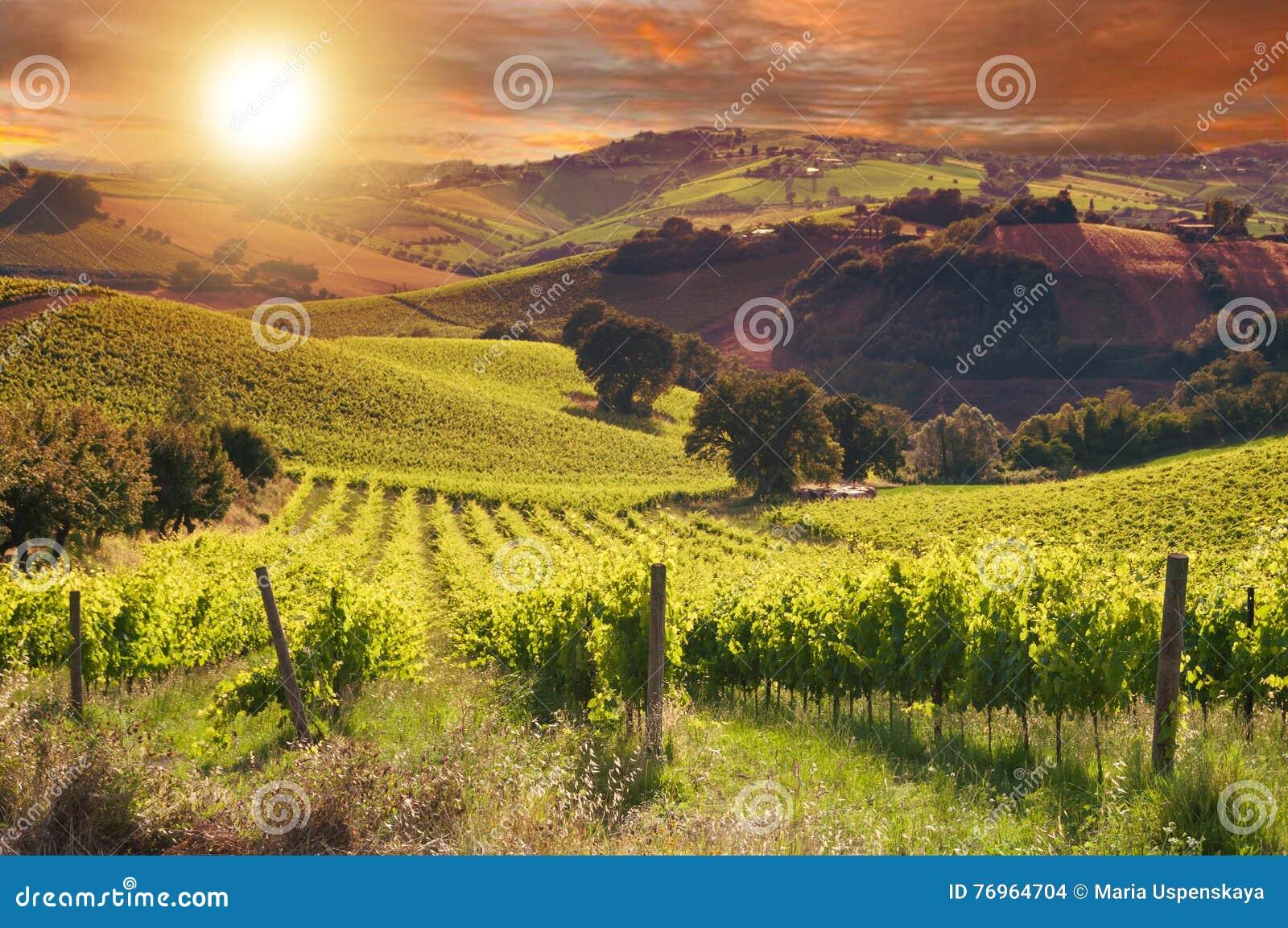 Paysage rural avec un vignoble vert parmi des collines