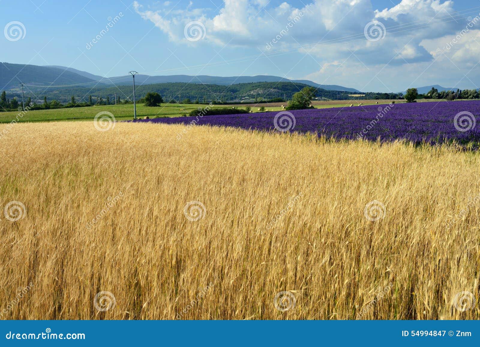 Paysage rural de la Provence