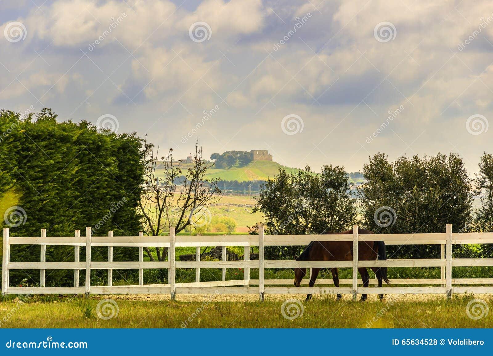Paysage rural de ressort : ferme avec le cheval, Di Puglia de Gravina L Italie (Pouilles)