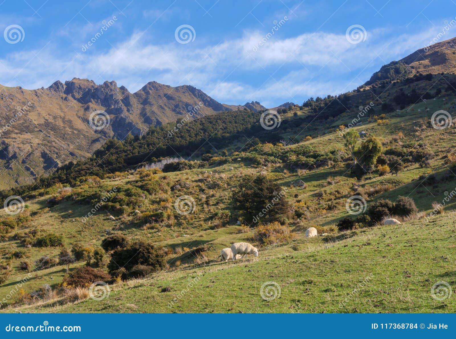 Paysage rural du Nouvelle-Zélande