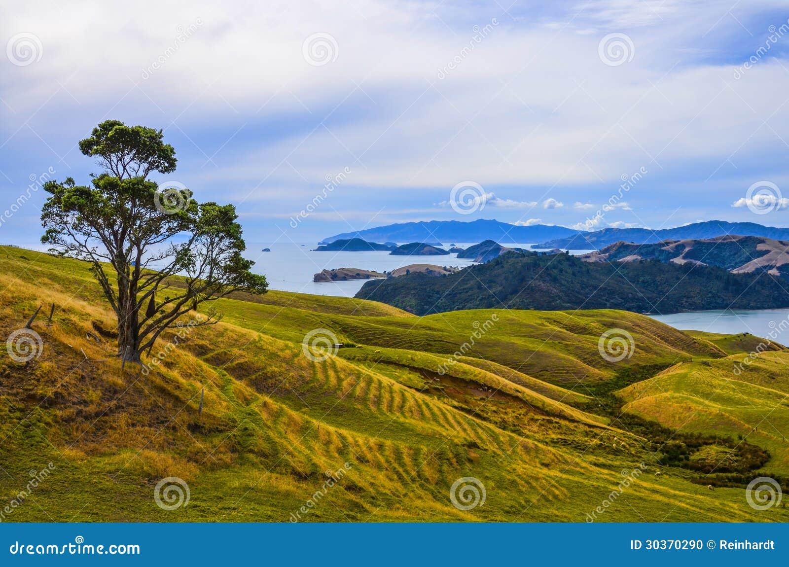 Paysage rural, Nouvelle-Zélande