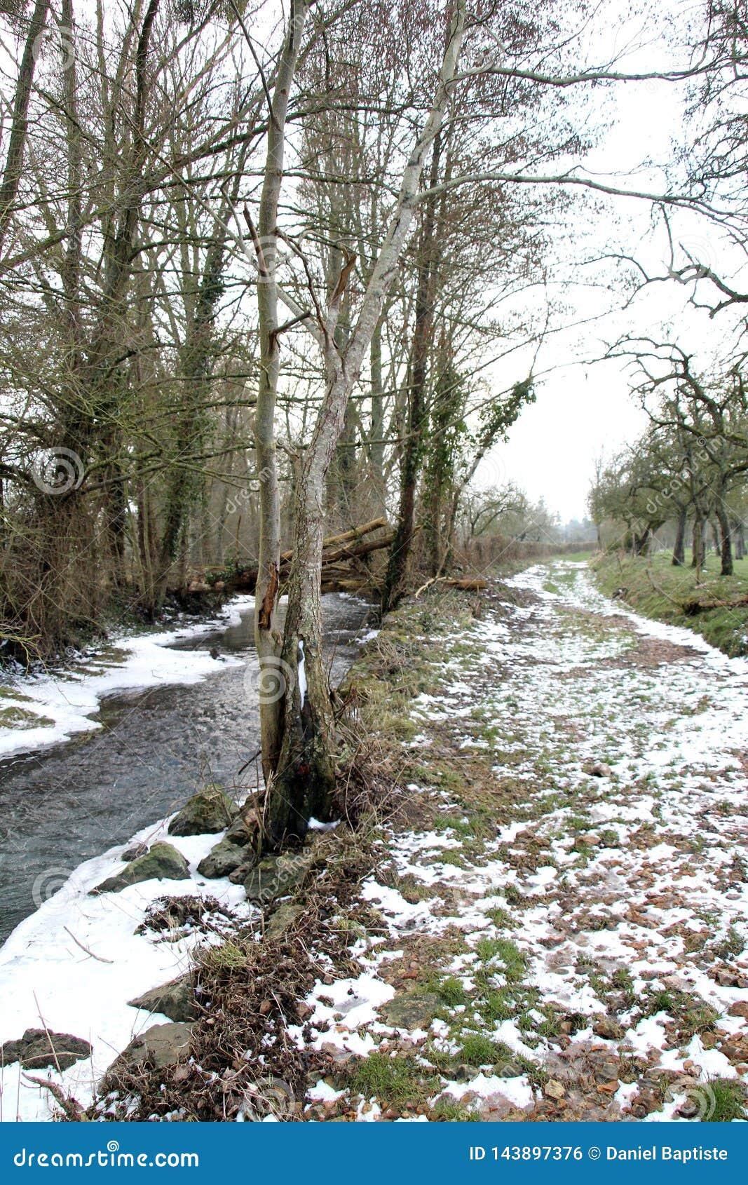 Paysage rural, promenade dans les bois en hiver