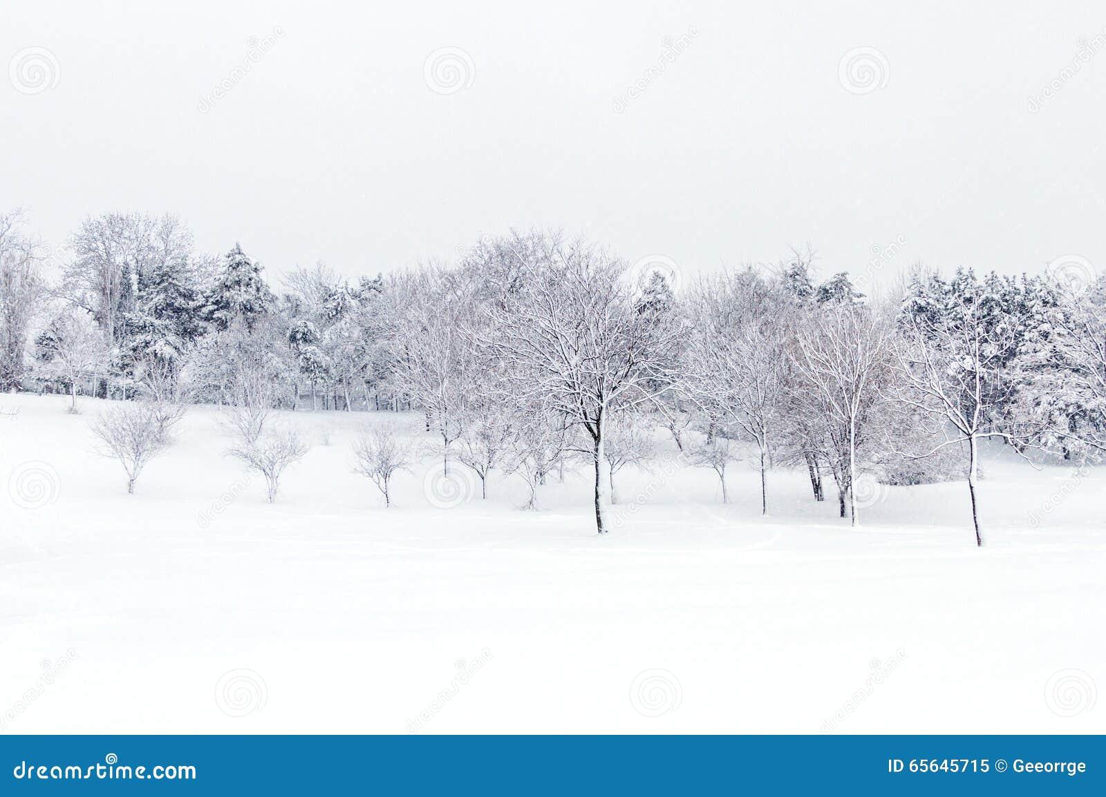 Paysage sauvage après une tempête de neige