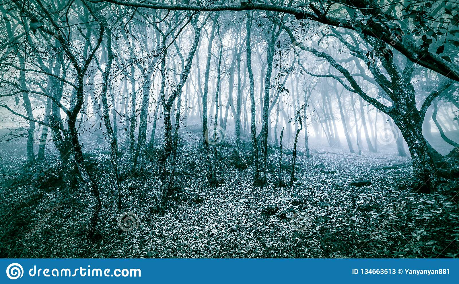 Paysage scénique d hiver de forêt fraîche