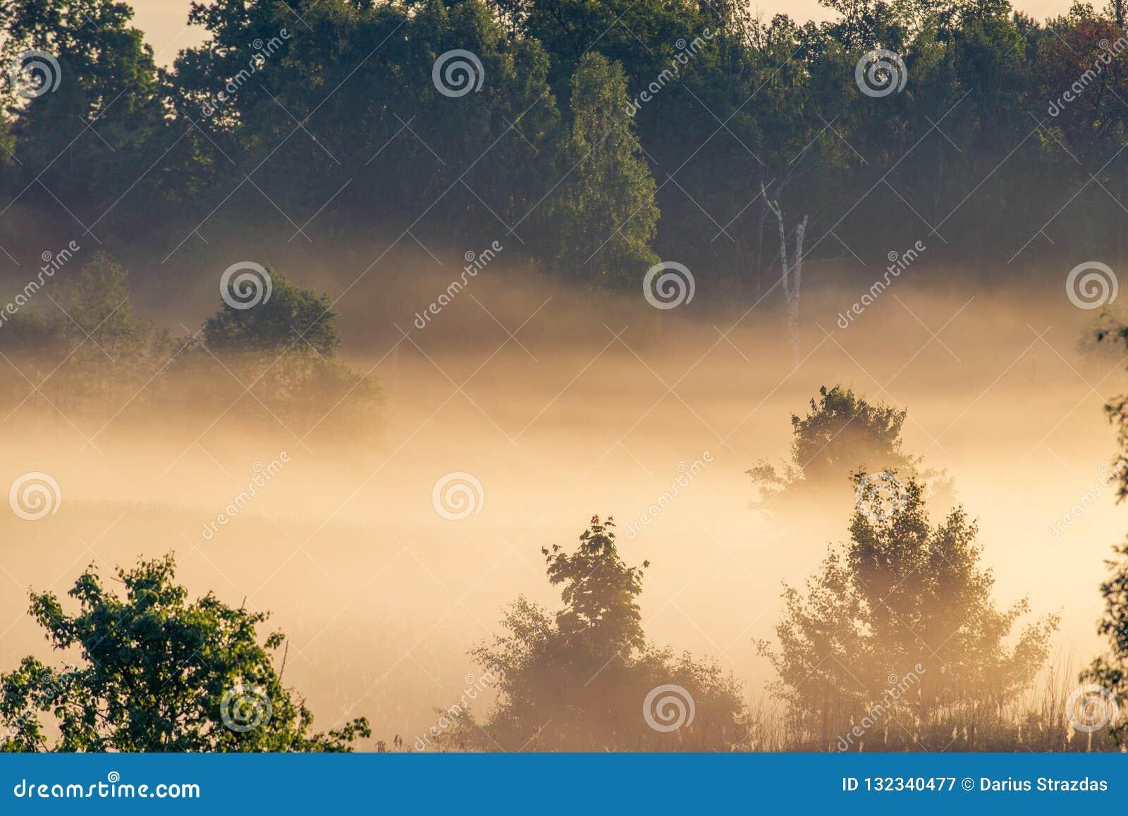 Paysage scénique de brume
