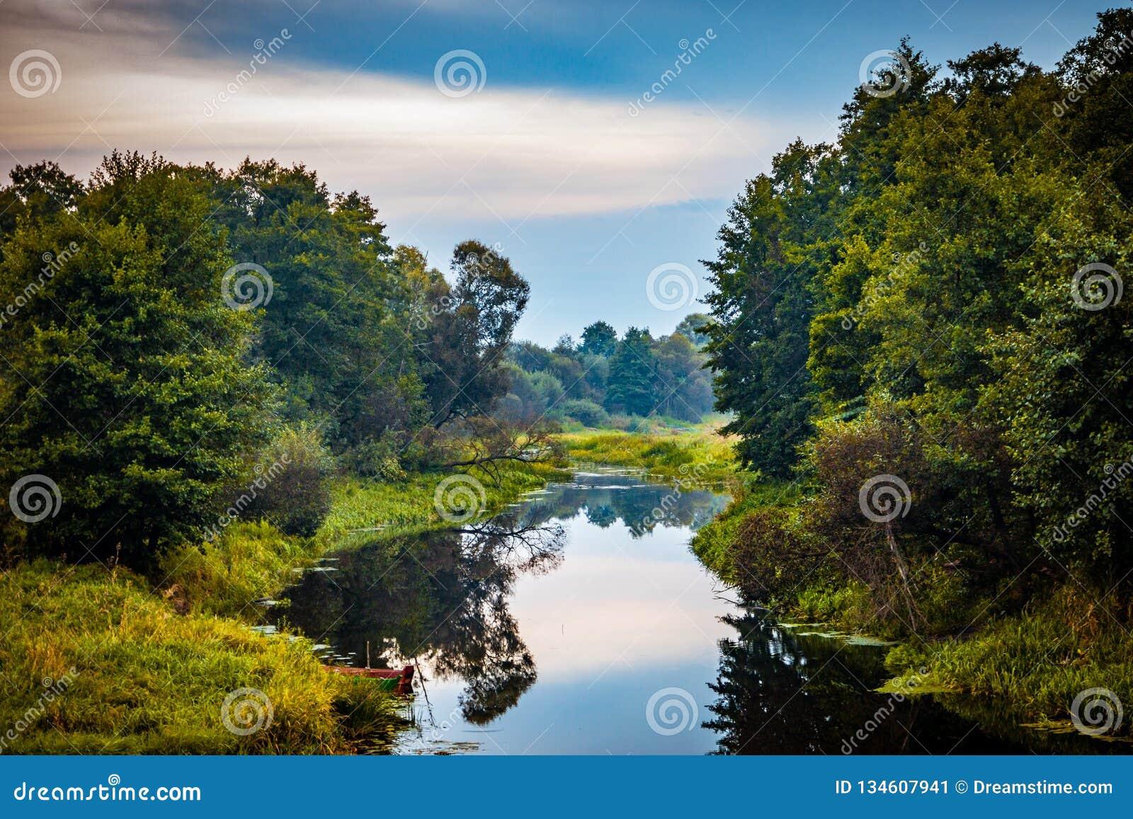 Paysage silencieux sauvage d automne de réflexion de rivière de forêt Panorama d eau de rivière de forêt d automne Réflexion de r