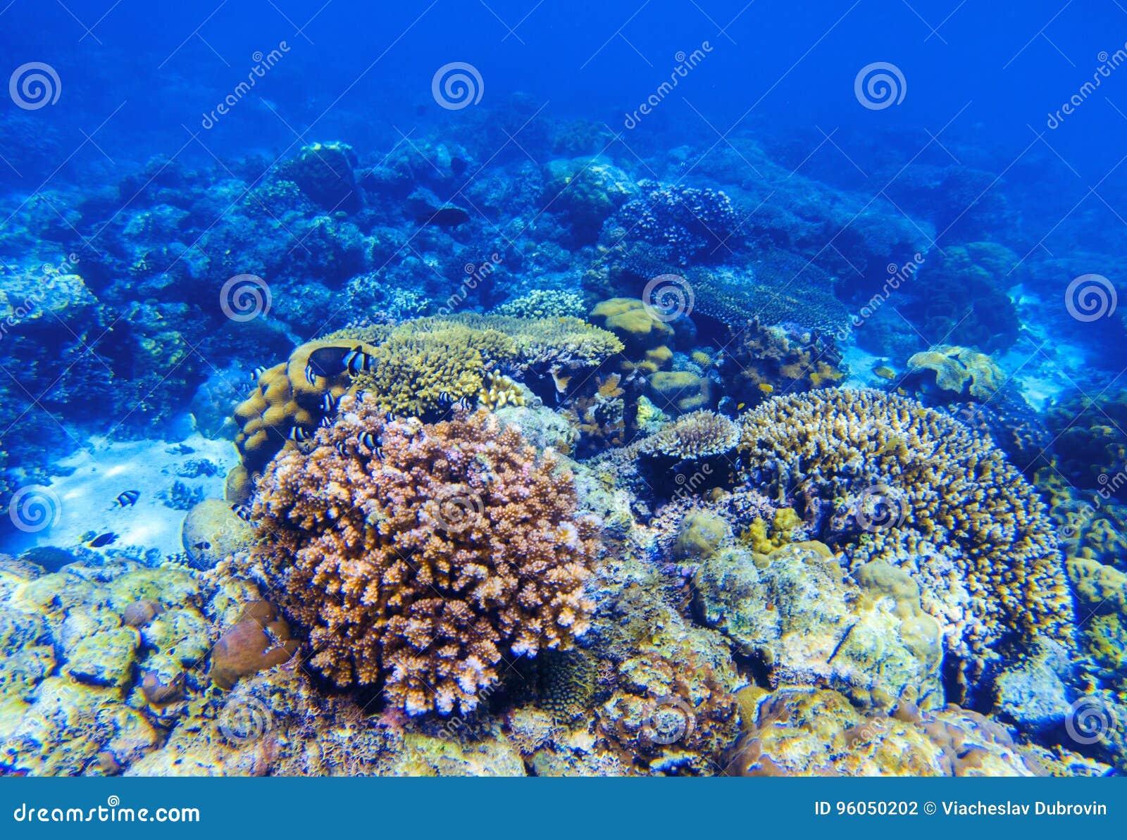 Paysage sous-marin de récif coralien Formes de corail diverses Poissons de corail en récif