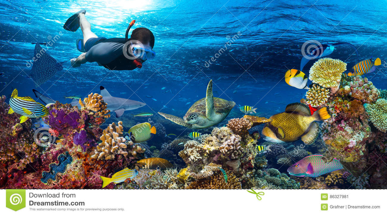 Paysage sous-marin de récif coralien snorkling
