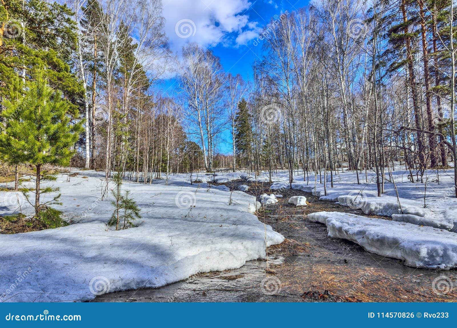 Paysage tôt de ressort dans la forêt avec la neige et le ruisseau de fonte