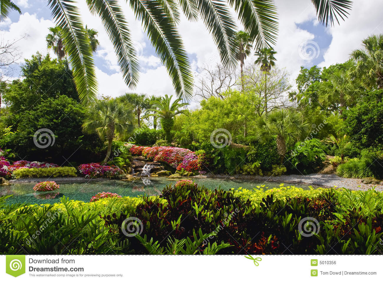 paysage tropical de jardin photo stock image du feuillage 5010356. Black Bedroom Furniture Sets. Home Design Ideas