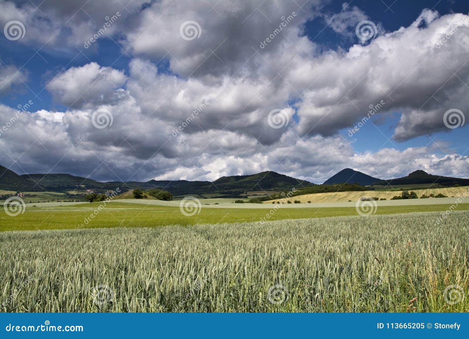 Paysage vert de grande ferme