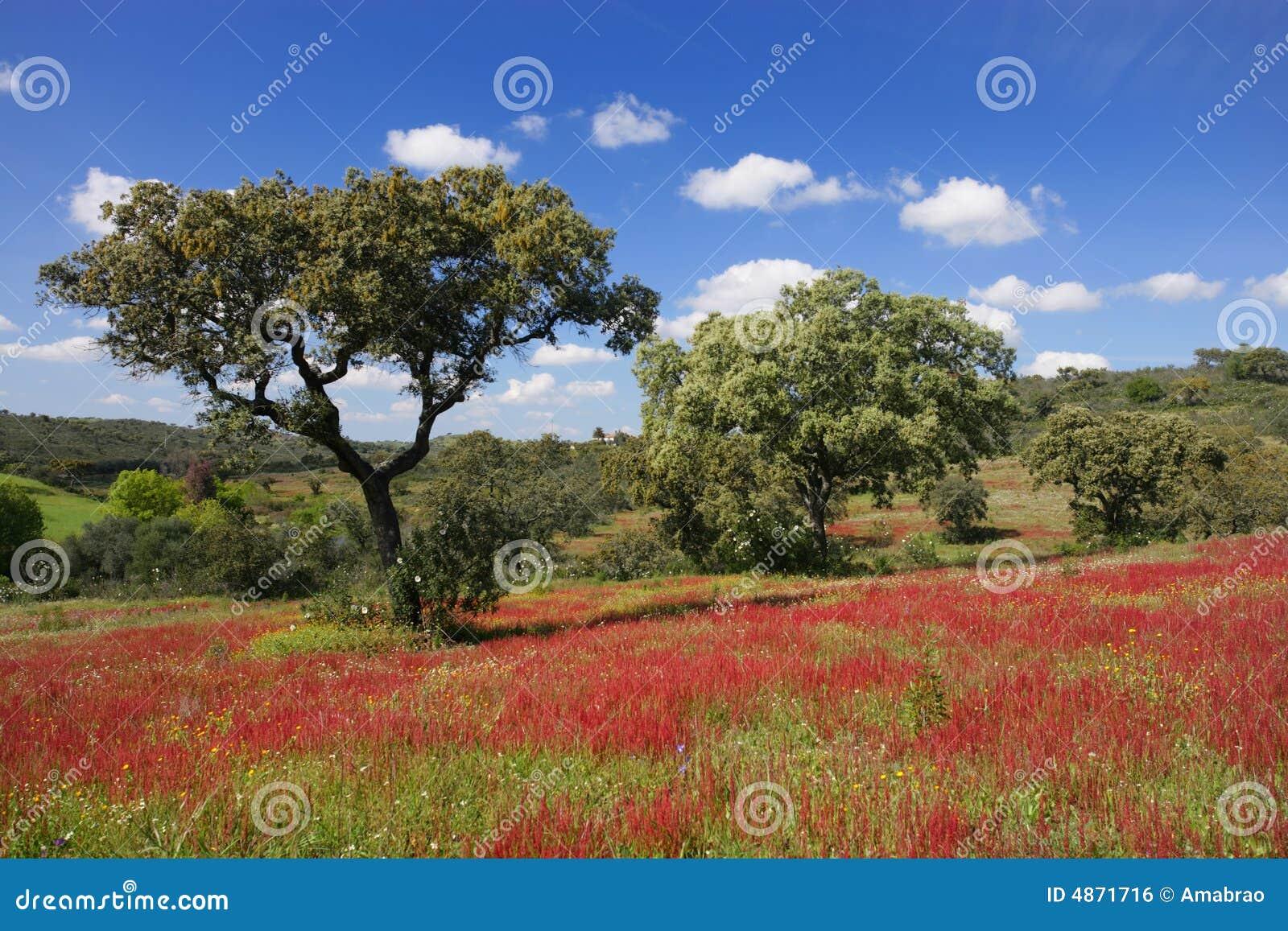 Paysage vert et rouge image libre de droits image 4871716 for Paysage vert