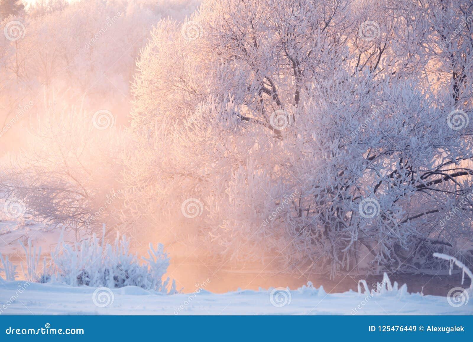 Paysage vif d hiver