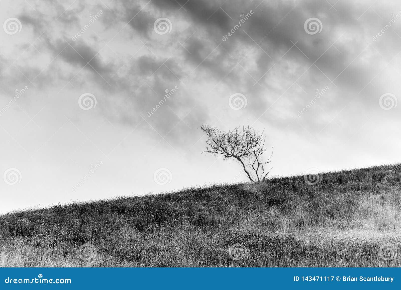 Paysages scéniques de collines de Wither