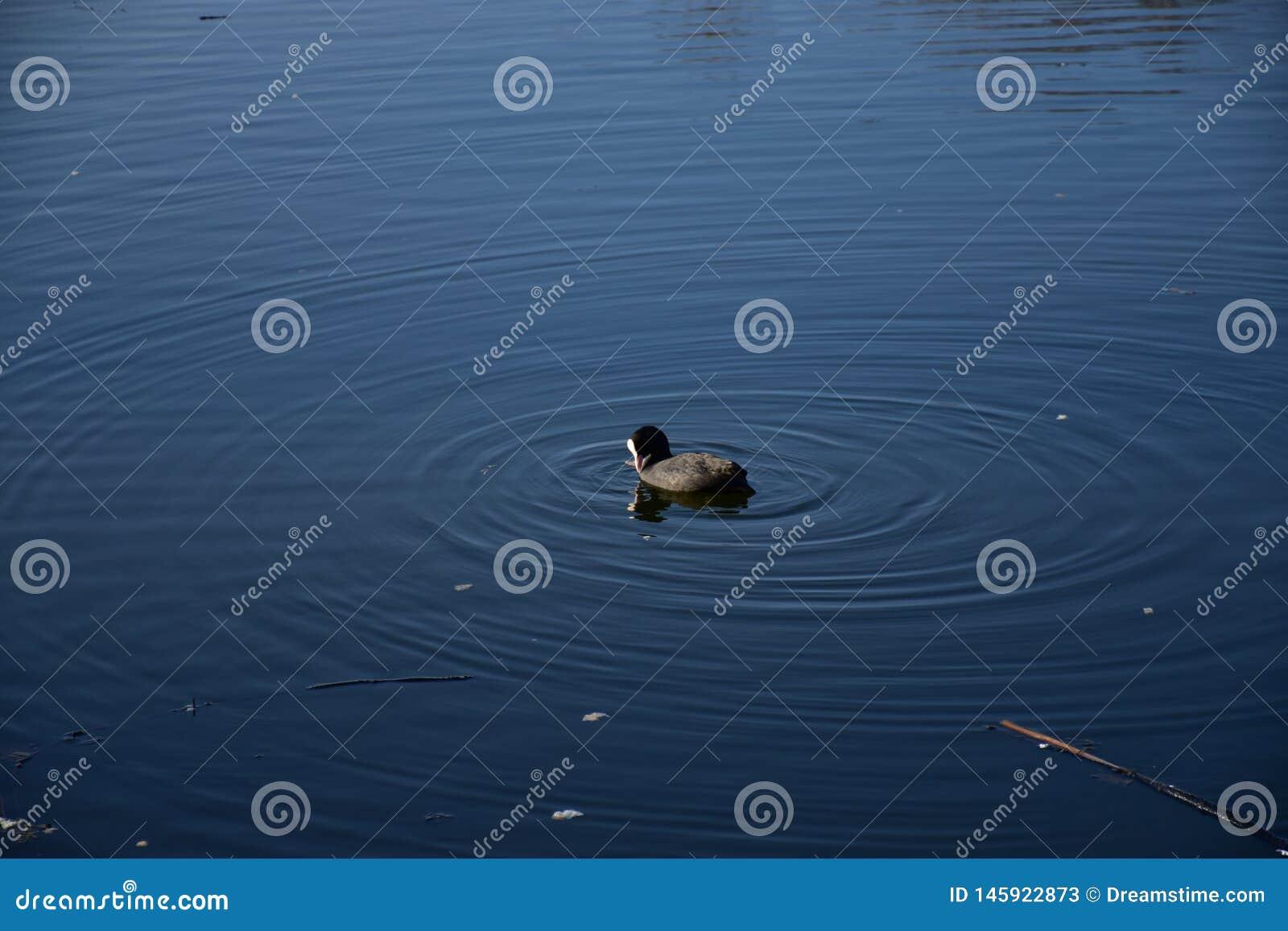 Paz do pato