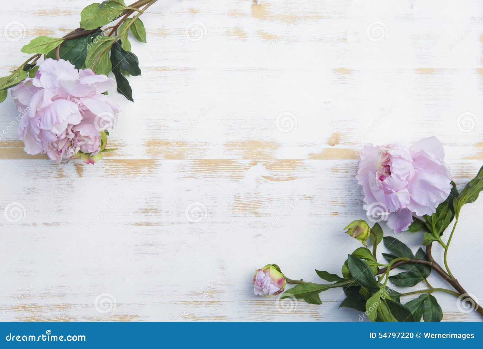 Peônias cor-de-rosa no fundo de madeira rústico branco